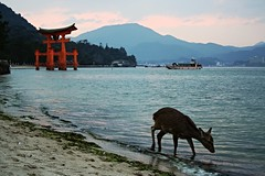 Miyajima 2 (__Thomas Tassy__) Tags: camera trip travel color art beach beautiful japan canon wow wonderful landscape photography eos 350d photo amazing nice fantastic asia photographer shot superb artistic gorgeous awesome great picture atmosphere pic best hiroshima deer miyajima abroad stunning moment capture beau magnifique prise joli meilleur genial grandiose splendide