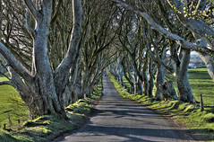 dark hedges hdr (seanfderry-studenna) Tags: road county ireland sunset irish mist plant tree nature forest sunrise dark landscape alley outdoor branches tourist northern beech hedges antrim armoy dramatictonemapped