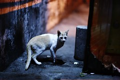 The Last Pussy (N A Y E E M) Tags: street portrait cat candid latenight stray bangladesh carwindow chittagong norahmedroad