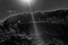 Beam me up, Scotty (RadarOReilly) Tags: germany island seagull dunes norderney insel northsea mwe nordsee dnen niedersachsen
