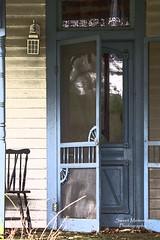 Blue Door (paulawalla37) Tags: oncewashome