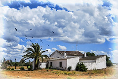 Rural landscape (Jos Luis Prez Navarro) Tags: sky espaa house tree birds clouds rural landscape arbol casa spain nikon paisaje aves andalucia pajaros cielo palmtree nubes jaen  paysage palmera d60 marmolejo blacky2007 joseluisperez