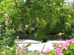 (Psinthos.Net) Tags: road trees tree nature easter countryside spring day pavement sidewalk april geranium planetrees railings sunnyday paved planetree pinkflowers pinkgeranium   orthodoxeaster vrisi   psinthos                   vrisiarea  vrisipsinthos     easter2016