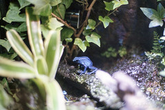 20160227-23 (GenJapan1986) Tags: film japan aquarium  miyagi  2016     nikonnewfm2 fujifilmfujicolorsuperiaxtra400