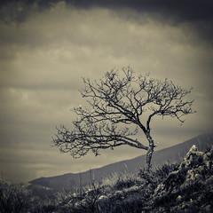 lone tree (Giancarlo Vetrone) Tags: blackandwhite mountain tree leaves foglie rocks bn cielo albero rocce montagna biancoenero lonetree pianta allaperto duetoni
