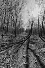 Long Shadow (cj howitt) Tags: trees sunlight ontario monochrome blackwhite shadows kingston dogpark milesquare