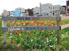 Philly 2016 Bulbs Not Bullets Mantua (wheeltoyz) Tags: street city philadelphia cheese liberty hall spring strawberry tulips bell pennsylvania south rocky pa pretzels tulip bulbs philly mansion bullets norristown horticulture steaks mantua