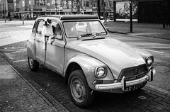 Bulldog and Citroen (PaulHoo) Tags: life city urban blackandwhite bw dog holland film netherlands monochrome car analog voigtlander bessa trix citroen grain rangefinder bulldog r2 protection zeist lightroom 2016