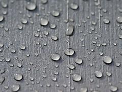 rain drops (Danyel B. Photography) Tags: bw white black color macro monochrome rain drops close bokeh no sony details sigma sharp sw 28 nah makro schwarz a7 regen tropfen 105mm weis scharf farblos