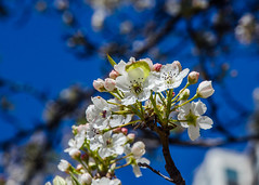 DSC_1109 edited-173 (pattyg24) Tags: flowers trees chicago milenniumpark