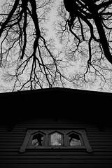 (Mikko Luntiala) Tags: trees shadow blackandwhite bw house reflection window silhouette vertical suomi finland dark helsinki ominous april talo treebranches pasila lnsipasila 2016 heijastus d600 varjo puut ikkuna siluetti huhtikuu oksat synkk nikond600 afsnikkor2470mmf28ged uhkaava mikkoluntiala puunoksat varjoisa pystysuora