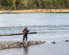 Fly Fishing in the Bow (Scott Martin Calgary) Tags: ca canada calgary alberta bowriver fishcreekprovincialpark sikomelake