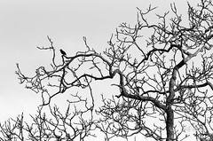 vivement le printemps (Grard Chauvin) Tags: france villiers mayenne paysdeloire