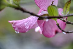 After the Rain (foregorp) Tags: flowers nature water beautiful leaves rain petals colorful droplet