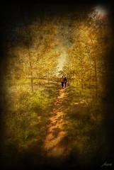 ... el camino no es largo cuando  ests con la persona que amas ... (franma65) Tags: camino pareja amor campo gallecs robado