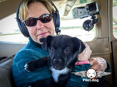 Volunteer Kathy Phelan is cuddling one of our puppy rescue passengers on our flight from Greensboro, NC to Coatesville, PA, just outside Philadelphia. Kathy is wearing one of our Dog Lives Matter red wrist bands which you can get at http://store.pilot.dog (Pilot.Dog) Tags: rescue dog dogs aviation pilot pilotdog