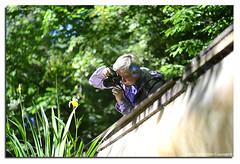 Oasi-S.Alessio-25-04-2016_018 (fdpdesign) Tags: italy macro nature nikon natura animali d800 pavia oasi 2016 salessio nikon105micro