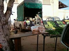 Photo-0084 (CUPACABANA) Tags: world usa france constantine algerie blida setif oran dz alger bejaia hassi annaba chlef arzew mostaganem mesfsoukh