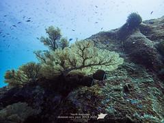 Dumnam New Year_16_2015 (Pop_narute) Tags: ocean sea fish landscape thailand underwater th underwaterworld andaman underwaterlandscape
