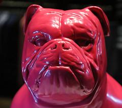 bulldog (spencerrushton) Tags: uk pink dog colour london shop night canon outdoors model walk bulldog add lumiere spencer londoncity londonnight londonuk canonl canonlens 24105mm canon24105mmlf4 spencerrushton 760d canon760d