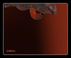 Small Watertrops 1 (LOMO56) Tags: wasser mallorca wassertropfen makroaufnahmen nahaufnahmen watertrops macroaufnahmen