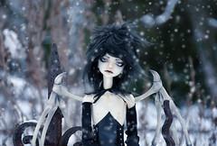 Demonic snow (Bazikotek Isia) Tags: winter boy snow black cemetery dark wings doll handmade matthew hugh gothic goth demon bjd dollfie balljointeddoll dollchateau bazikotek