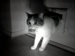 20160210-074713-i-1 (Catflap central) Tags: camera dog pet cats woof cat pi raspberry meow doggie catdoor catflap kattenluik katzenklappe catflapj2nnl taggingasdoguntilautotagginghasanoptout robotaggingisthedevil