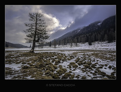 When the sun refuses to shine (stefanocaccia61) Tags: lake snow tree ice nature clouds forest dawn nuvole natural cloudy pines neve montagna paesaggio ghiaccio foresta nuvoloso