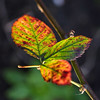 flowers in light #73 (lumofisk) Tags: red plant tree green leaf bright o outdoor grün beech leuchtend 105mm 0mmf0 nikondf rotgg