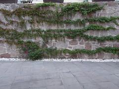 DSCN2500 (Alejandra Fajardo) Tags: flowers naturaleza 3 nature landscape mexico hotel la mujer plantas iii jardin paisaje escultura trendy chic suites reserva milenio qro bugambilia querataro