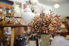 Dried Arrangement (PhotosbyDi) Tags: dookie everything eclectic driedflowers younameit driedarrangement nikond600 nikonf282470mmlens dookieemporium
