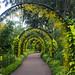 At Singapore Botanic Gardens