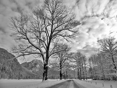 Adrian Vesa Photography (adr.vesa) Tags: road street trees winter cold tree ice nature way landscapes path