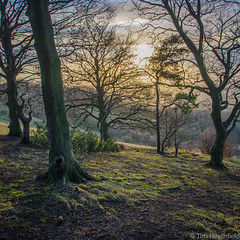 Cleeve Hill: Beechwood Sunset (all you need is light) Tags: sunset cheltenham beech beechtree cleevehill
