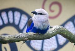 Bird (Hans van der Boom) Tags: bird netherlands animal nederland nl safaripark beeksebergen noordbrabant hilvarenbeek hilarenbeek
