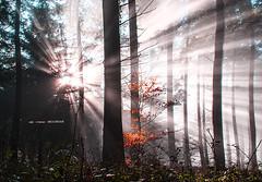 Rayos de luz (Jabi Artaraz) Tags: lighting light bosque zb haya pagoa abetos euskoflickr jabiartaraz jartaraz