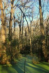 IMG_7382 (SweetMeow) Tags: forest shadows southcarolina boardwalk marsh conservancy hiltonheadplantation whoopingcranepondconservancy