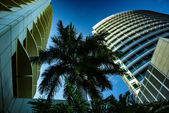 Palmtree between Nt House and Charles Darwin Centre (betadecay2000) Tags: city urban building tree buildings foto himmel darwin palm palmtree stadt cbd australien palme baum januar territory hochhaus australie 2016 austral hochhuser darwincbd cityofdarwin