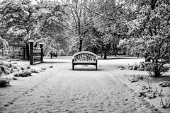 bench in snow (jfl1066) Tags: newjersey nj rutgers middlesexcounty rutgersgardens rugardens winter2016 february2016