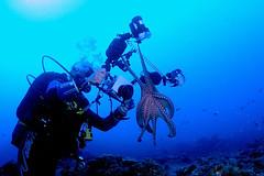 Lanzarote-201511-OldHarbourWrecks1-7-Octopus (Tony J Gilbert) Tags: macro lava nikon marine underwater lanzarote wideangle diving scubadiving volcanoes volcanic canaries shipwrecks canaryislands reefs wrecks islascanarias underwaterphotography puertodelcarmen marinefish playachica espaniola nikond300 safaridiving barcoshundidos oldharbourwrecks latinosa puntatinosa loserizos wwwsafaridivingcom