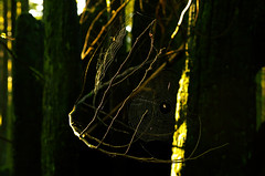 Gesture (Kristian Francke) Tags: park sunset sun tree green nature forest outdoors golden spider spring pattern afternoon bc pentax web 8 ears columbia trail 1750 british february gesture tamron f28 spiderwebs hairnet illuminate provincial unpleasant 2016 k50
