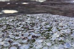 Shelly Rock (zookiemommy) Tags: ocean beach water rock surf sydney shell australia shore shelly