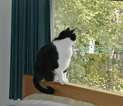 Fred the cat surveying our backyard, Wayne (ali eminov) Tags: trees cats birdhouse fred clotheslines