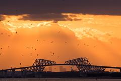 crowd of birds (gemapozo) Tags: bridge japan twilight pentax jp 日本 夕景 tokyobay k3 千葉県 東京湾 浦安市 smcpda60250mmf4edif 東京ゲートブリッジ tokyogatebridge