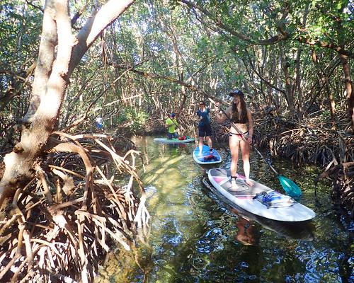 2_17_16 Kayak Paddleboard Tour Sarasota FL 13