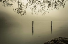 nebbia (lorenzini_s) Tags: winter lake nature water beautiful fog landscape lago nikon good capture nebbia acqua inverno effect atmosfera paesaggio trentino caldonazzo d5300 instaday