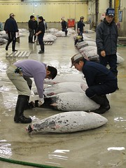 Inspecting the tuna fish (minimi007) Tags: fish japan canon tokyo market auction tsukiji tuna fishmarket tsukijifishmarket canonpowershotg11