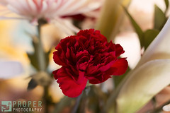 Dainty (Proper Photography) Tags: pink flowers red flower beautiful beauty canon 50mm colorful pretty bright lovely delicate pure fragile dainty noble frail 50mm18 canoncamera 50mmlens properphotography canon7d