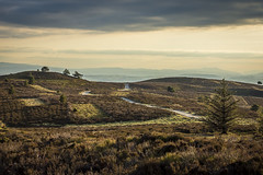 Evening light at Moel Famau (kirstygems) Tags: trees beautiful sunshine landscape evening walk heather winding wale goldenhour windingroad goldenlight windingpath moelfamau welshhills