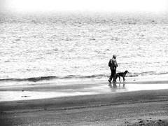 son meilleur ami (photosgabrielle) Tags: sea people bw dog chien mer beach noiretblanc plage bwphotography photosgabrielle